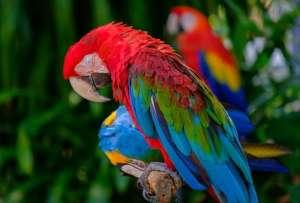夏季养鹦鹉需要注意哪些?鹦鹉夏季养护注意事项